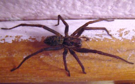 Eliminate Spiders and Insects in Your Home