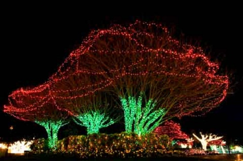 Outdoor Christmas Light Decoration Tips